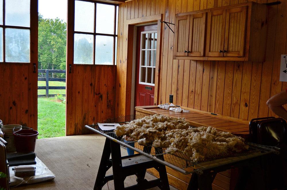 Fleece in the Barn
