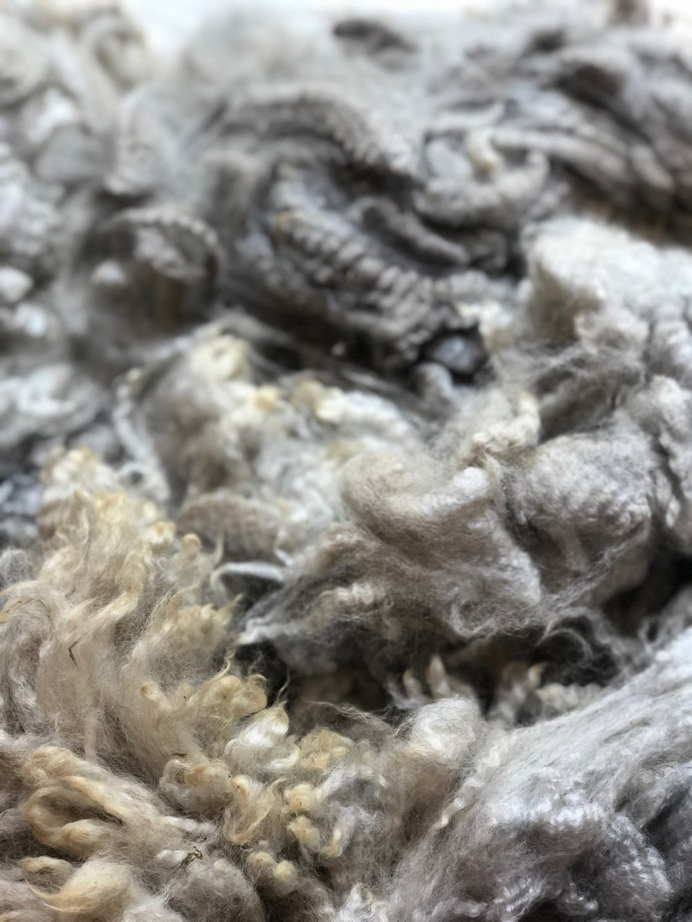 Raw Alpaca Fleece