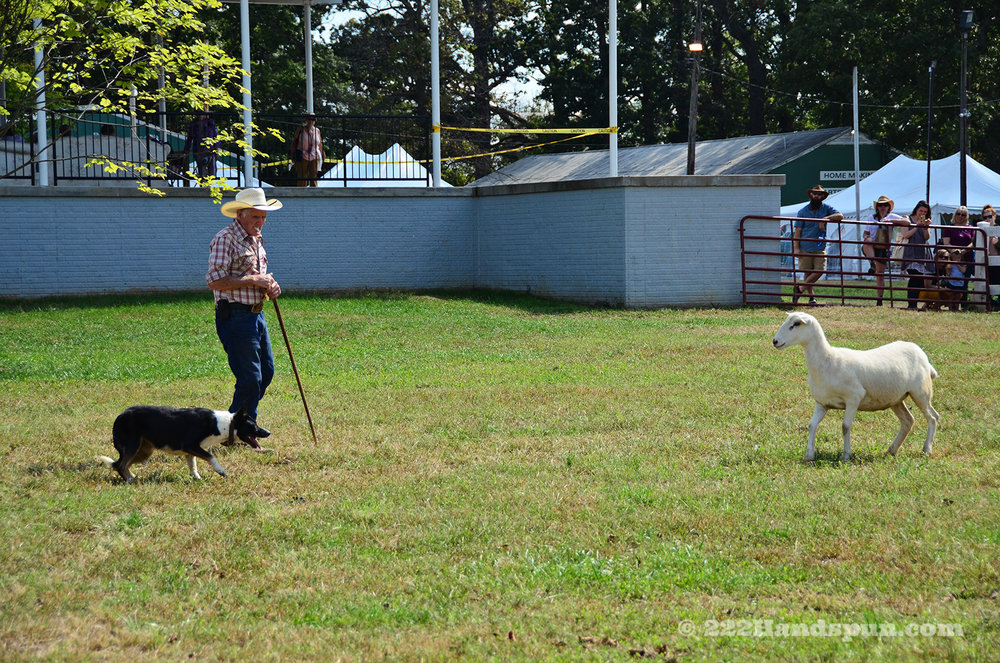 sheep dog demo_2446 copy.jpg