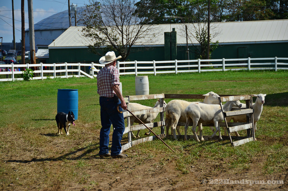 sheep dog demo_2456 copy.jpg