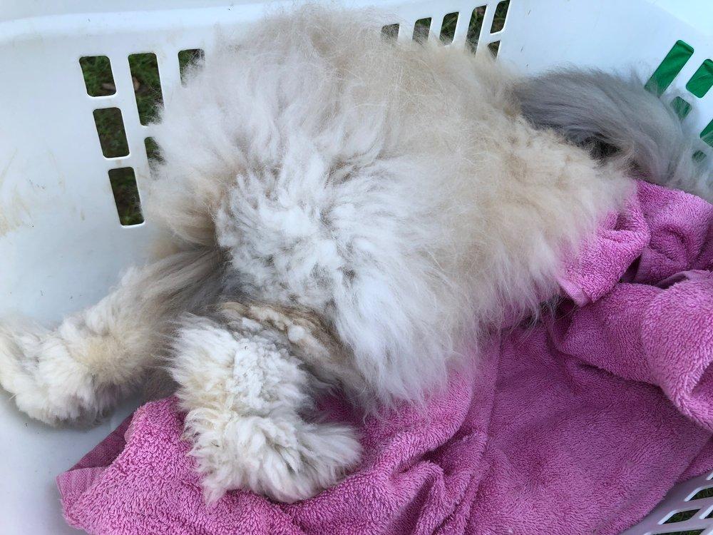 Tara's New Rabbit Trying to Hide