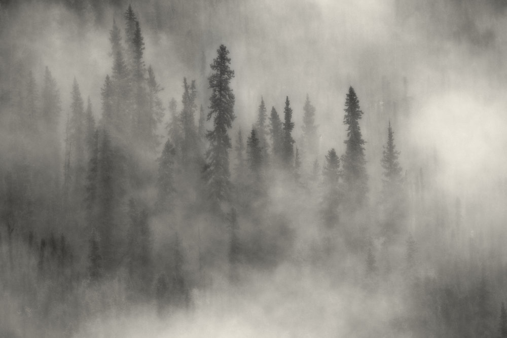 foggy trees yukon image Chris Pepper
