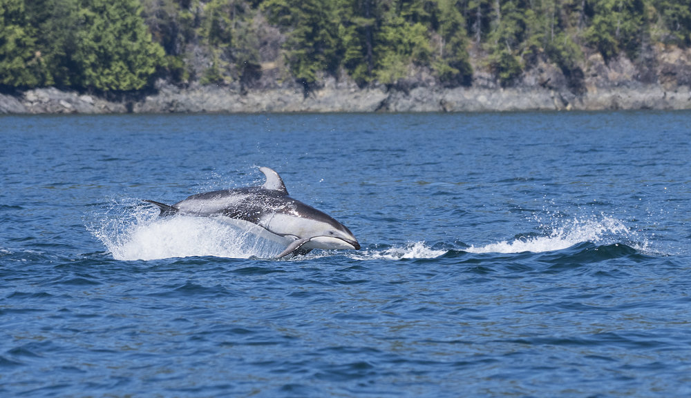 PWS dolphin.jpg