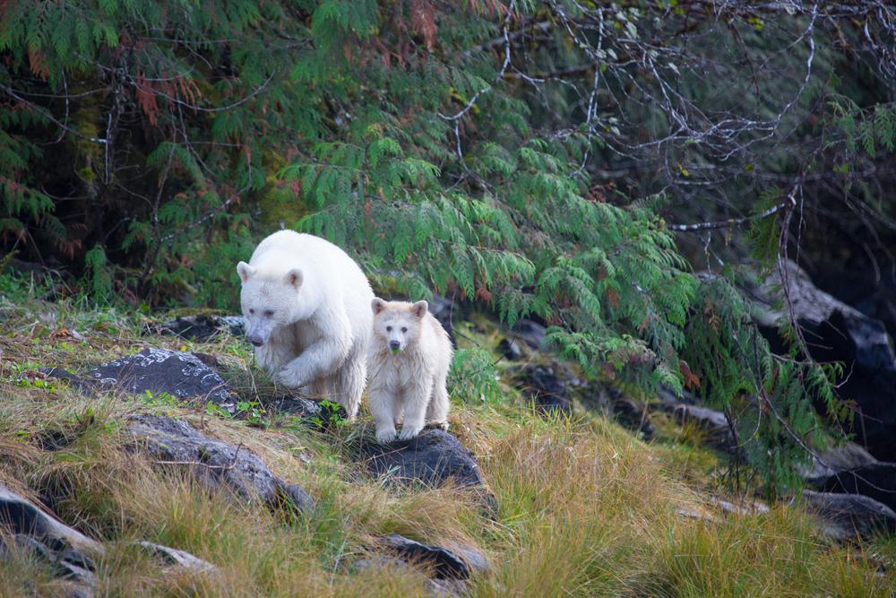 Image+taken+at+Spirit+Bear+Lodge.jpg