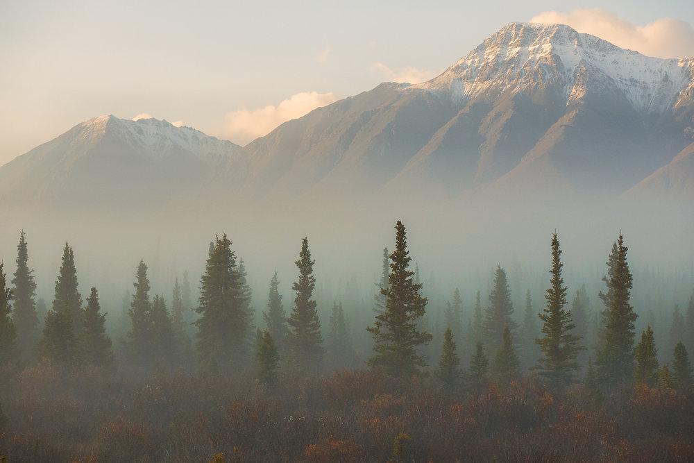 Fog landscape photography workshops