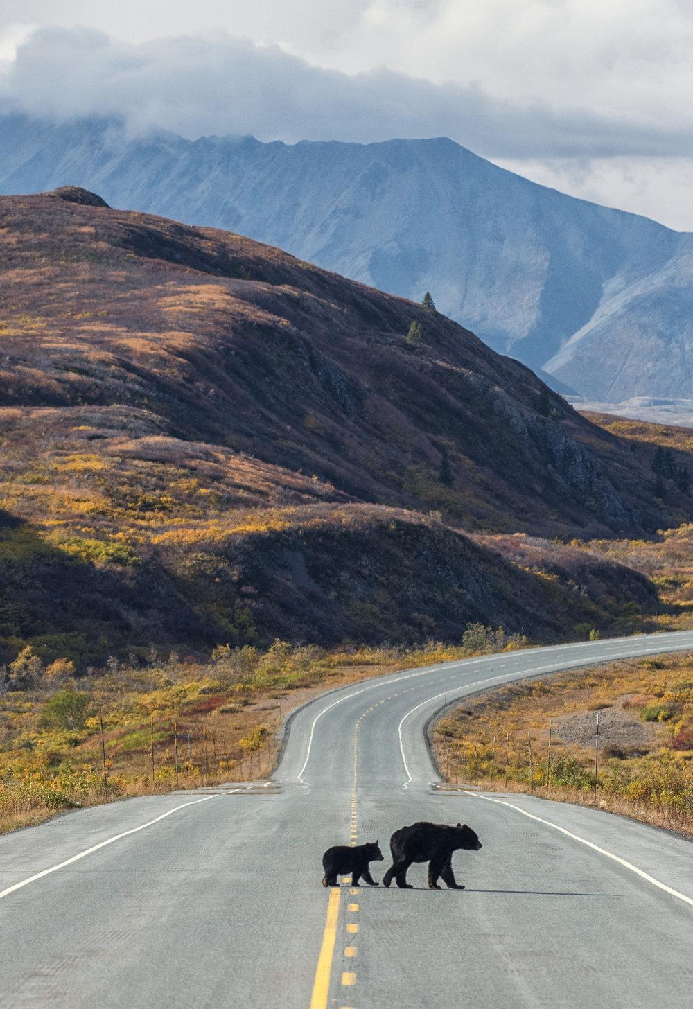 Canadian wildlife photography workshops