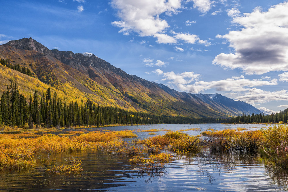 Fall colours around the lake in Yukon by Chris Pepper