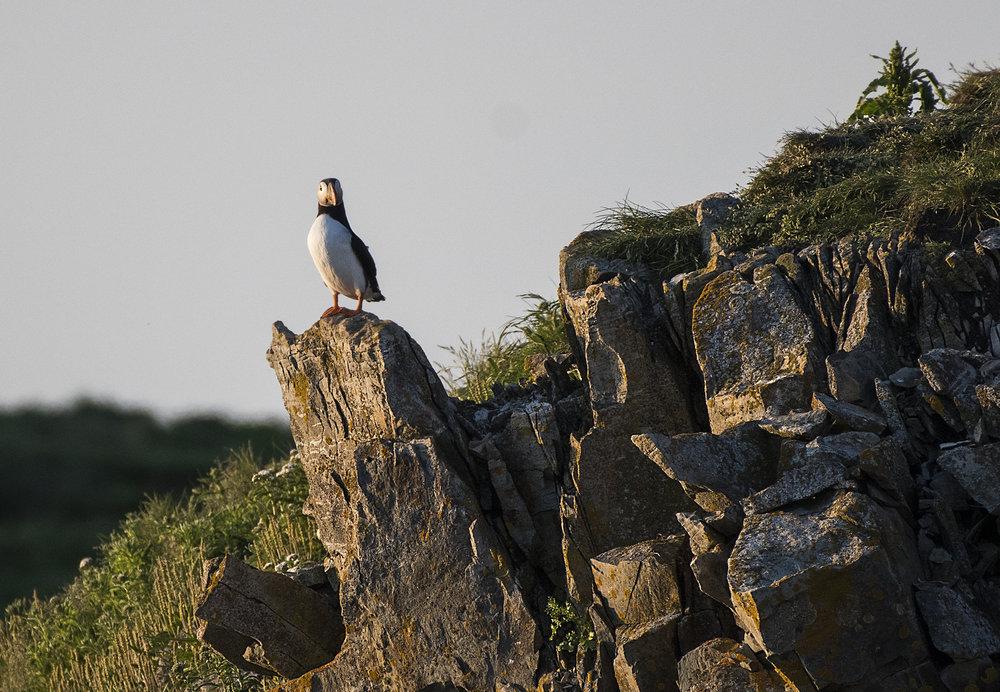 solo on a rock.jpg