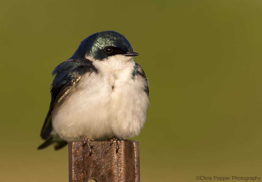 DX crop swallow test f4.jpg