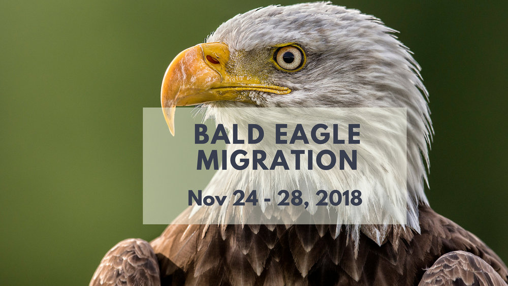Bald Eagle Photo Tour 2018 - North of 49 Photography