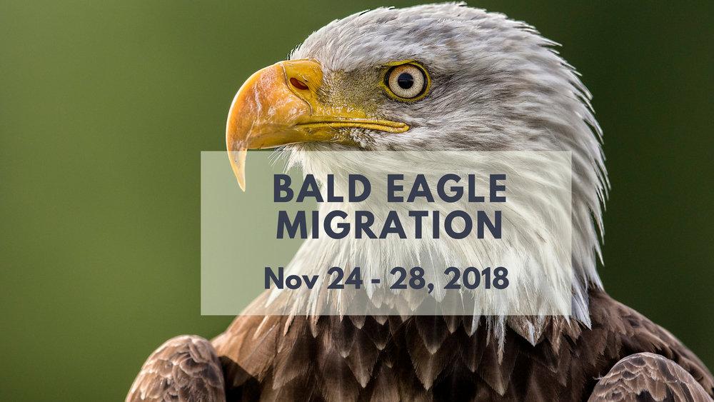 Bald Eagle Photo Tour 2018 - North of 49 Photography