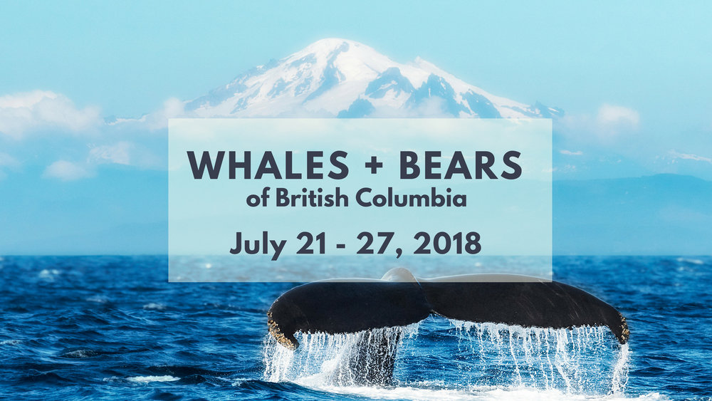 Orca & Black Bear Photo Tour - North of 49 Photography
