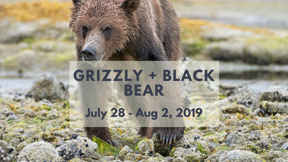 Black Bear & Grizzly Bear Photo Tour - North of 49 Photography