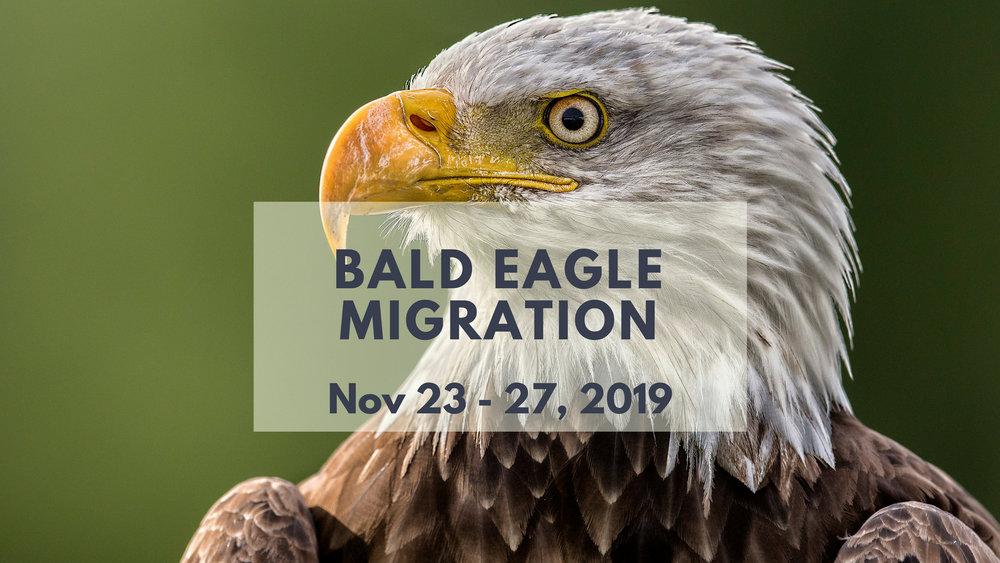 BC Bald Eagle Migration Photo Tour - North of 49 Photography