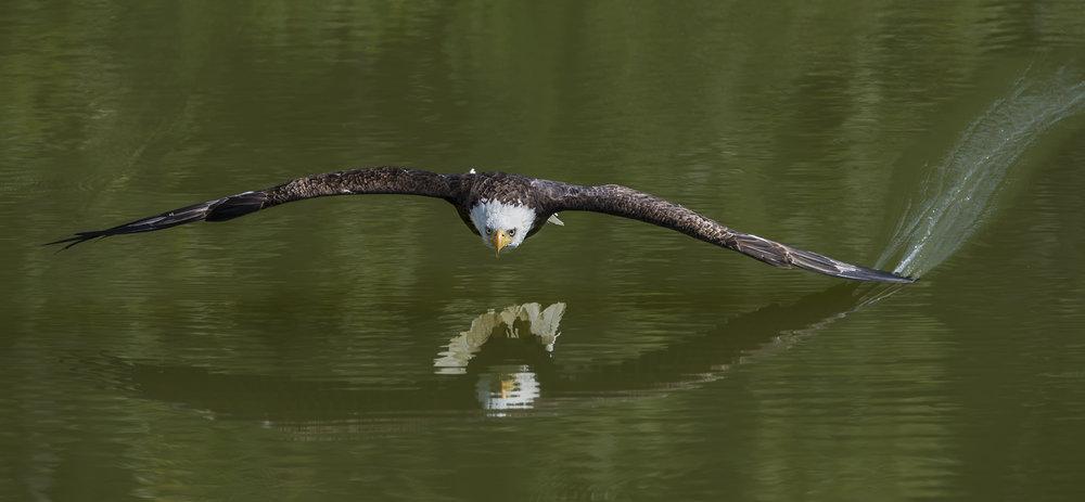 Bald Eagle Photo Tour