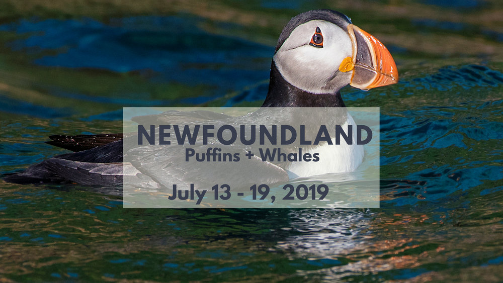 Newfoundland Photography Tours - North of 49 Photography