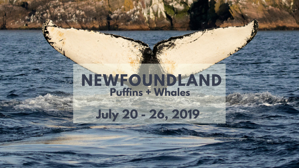 Newfoundland Photography Workshop 2019 - North of 49 Photography