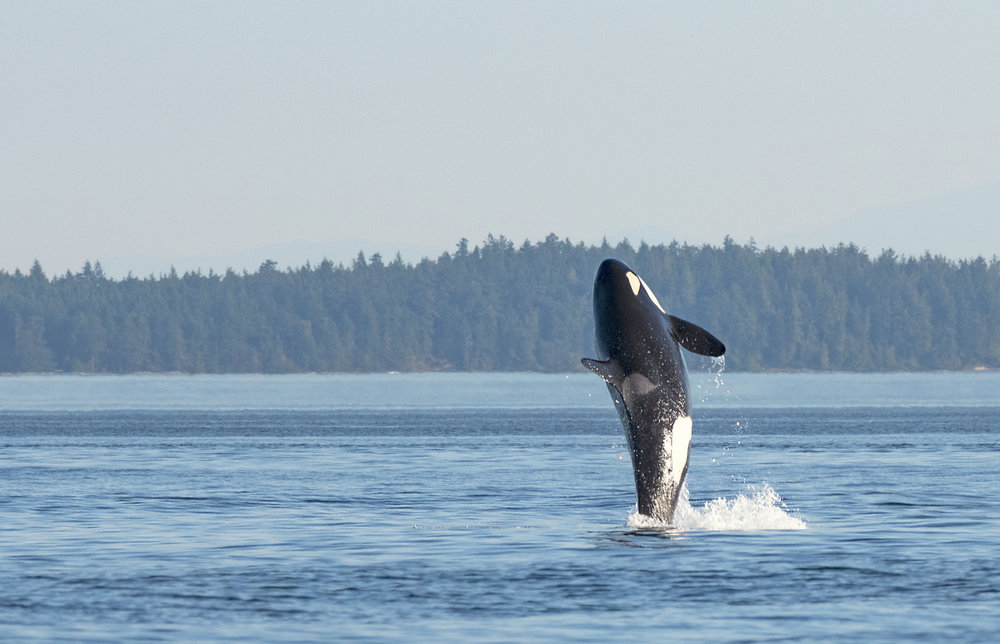 Orca whale photography workshops