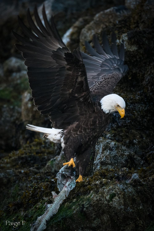 20180723-23-Eagle-24.jpg