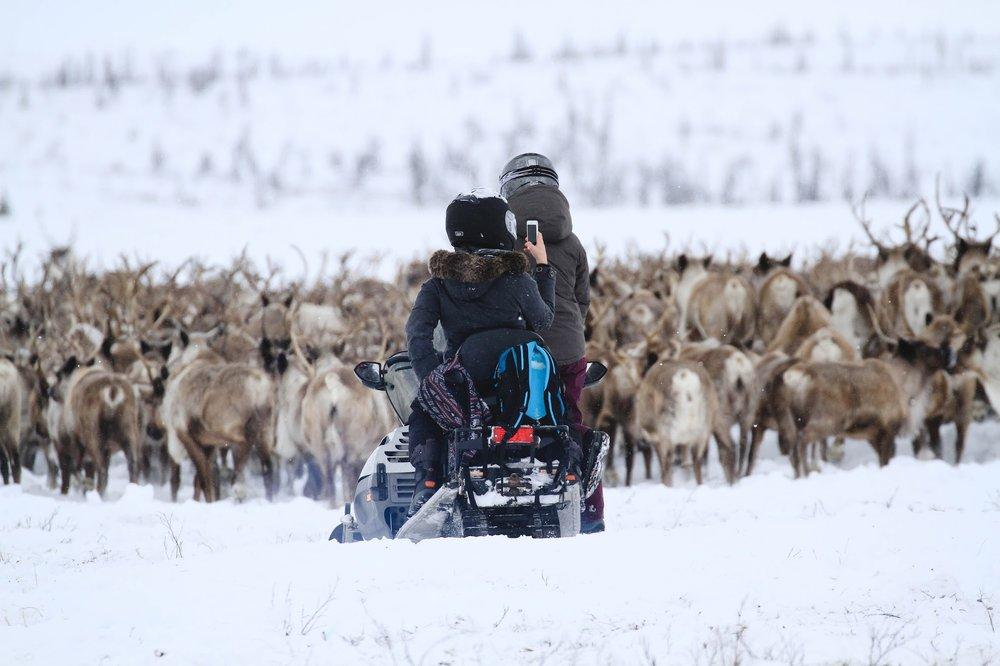 Reindeer-photo-1-.jpg