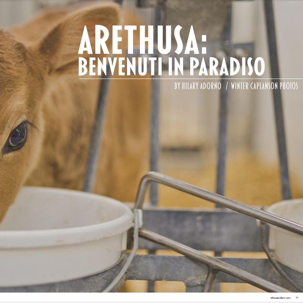 Arethusa.jpg