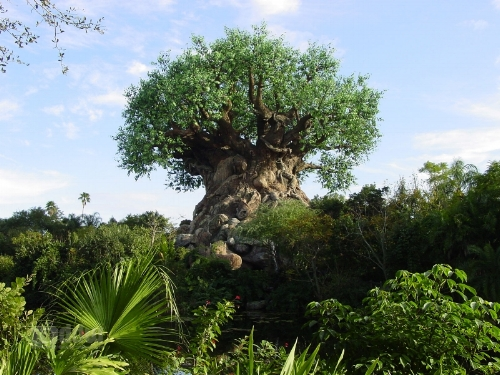 animal-kingdom-tree-of-life.jpg