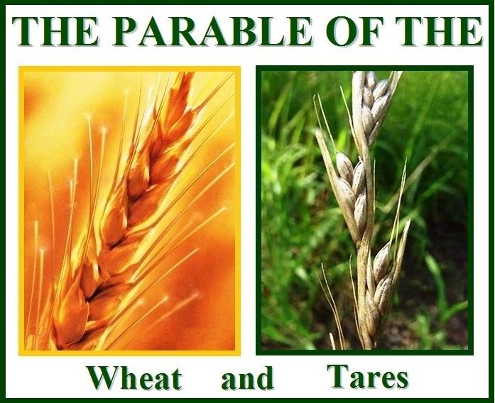 wheat-and-tares-e1.jpg