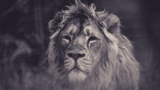 A++++FREE Unsplash.com, Earth Day Lion BuyerAgent.comDC, MD, VA Buy a Home,.jpg