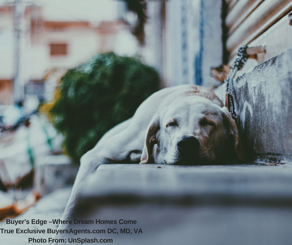 FREE Unsplash dog on step Buyer's Edge –Where Dream Homes Come True Exclusive BuyersAgents.com DC, MD, VA Photo From- UnSplash.com.jpg