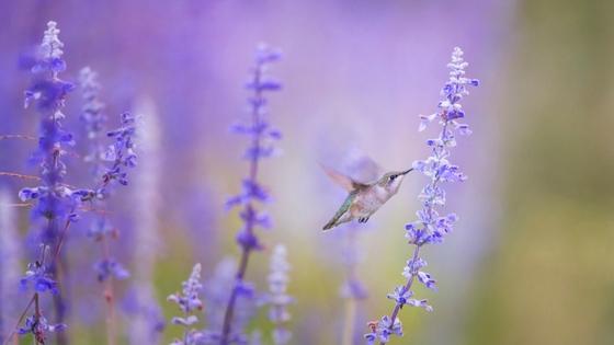 FREE Unsplash.com Purple hummingbird BuyersAgent.com DC.jpg