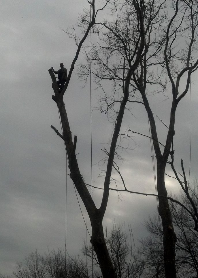 yockley tree service black & white.jpg