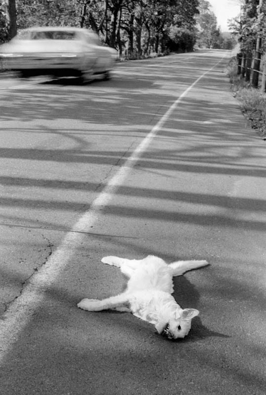 Dead Cat - New York, 1970