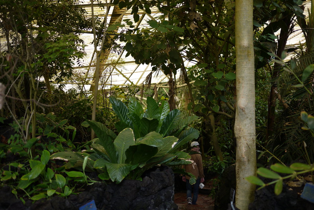 Tropical species greenhouse