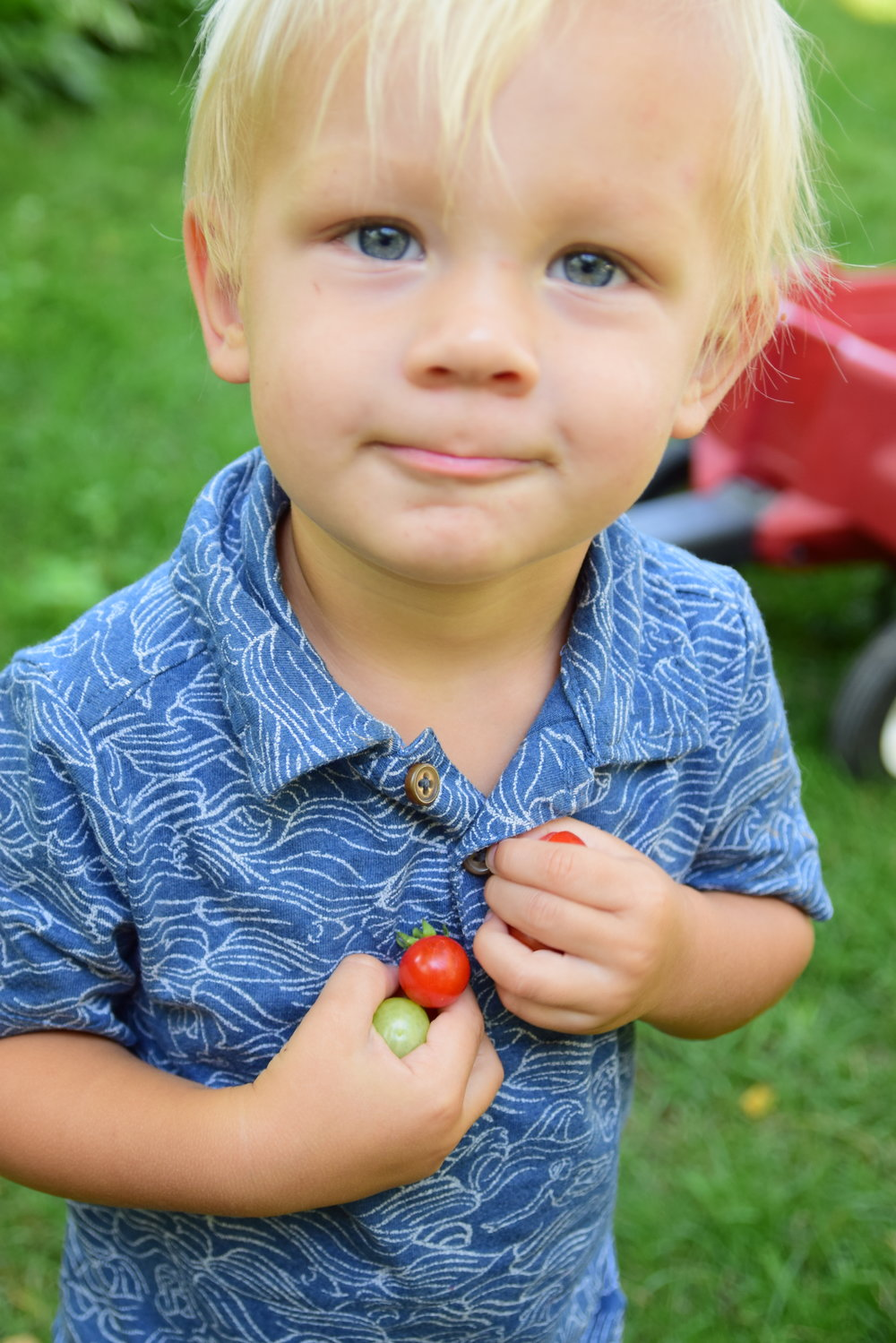 Garden Soap - We made Garden Soap with my little garden helper, Felix. (He was just a tomato picker, not involved with the actual soap making!)