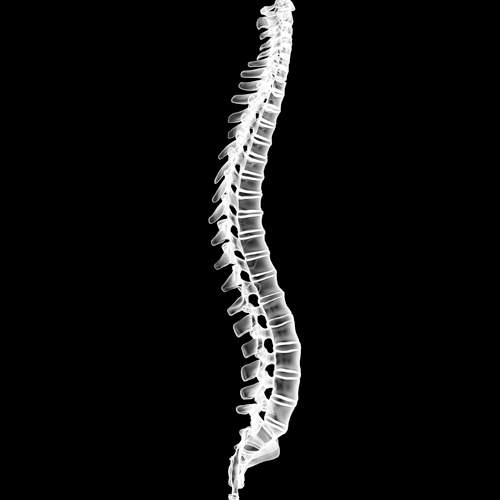 Spine Surgery -