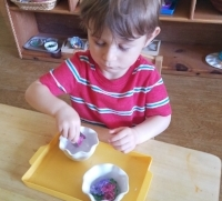 Torit Montessori Toddler Fine Motor