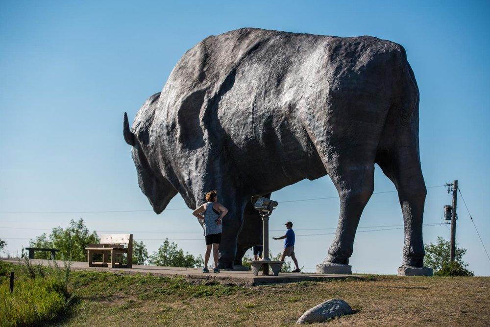 big damn buffalo