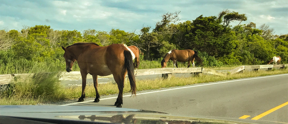 We were greeted by horses in the road.
