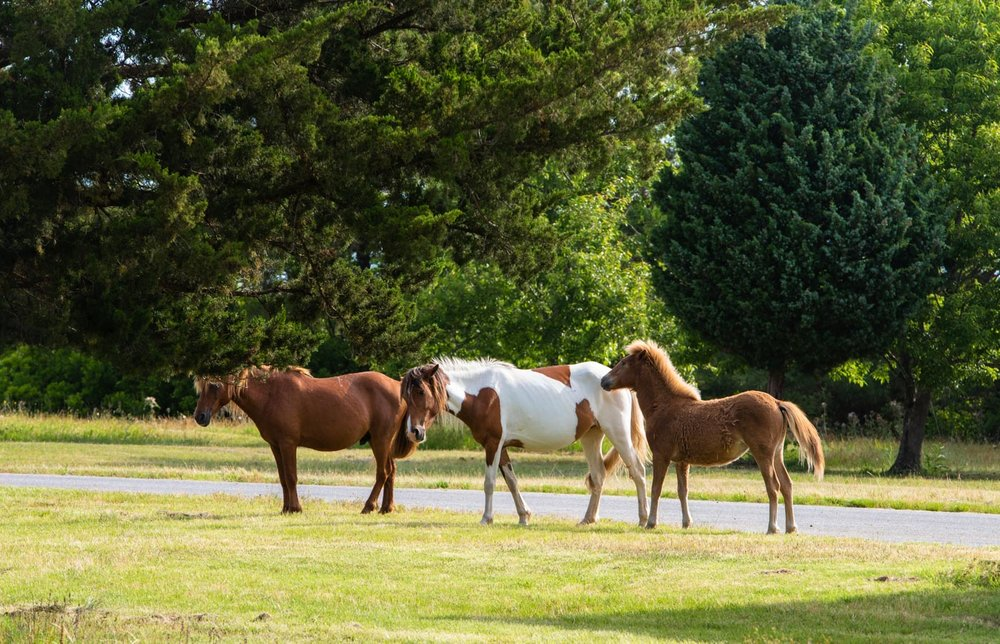 Horses with breakfast