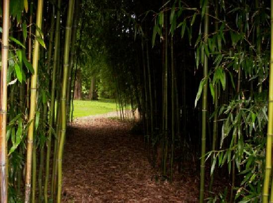 Part of Bamboo Grove at Blithewold Mansion