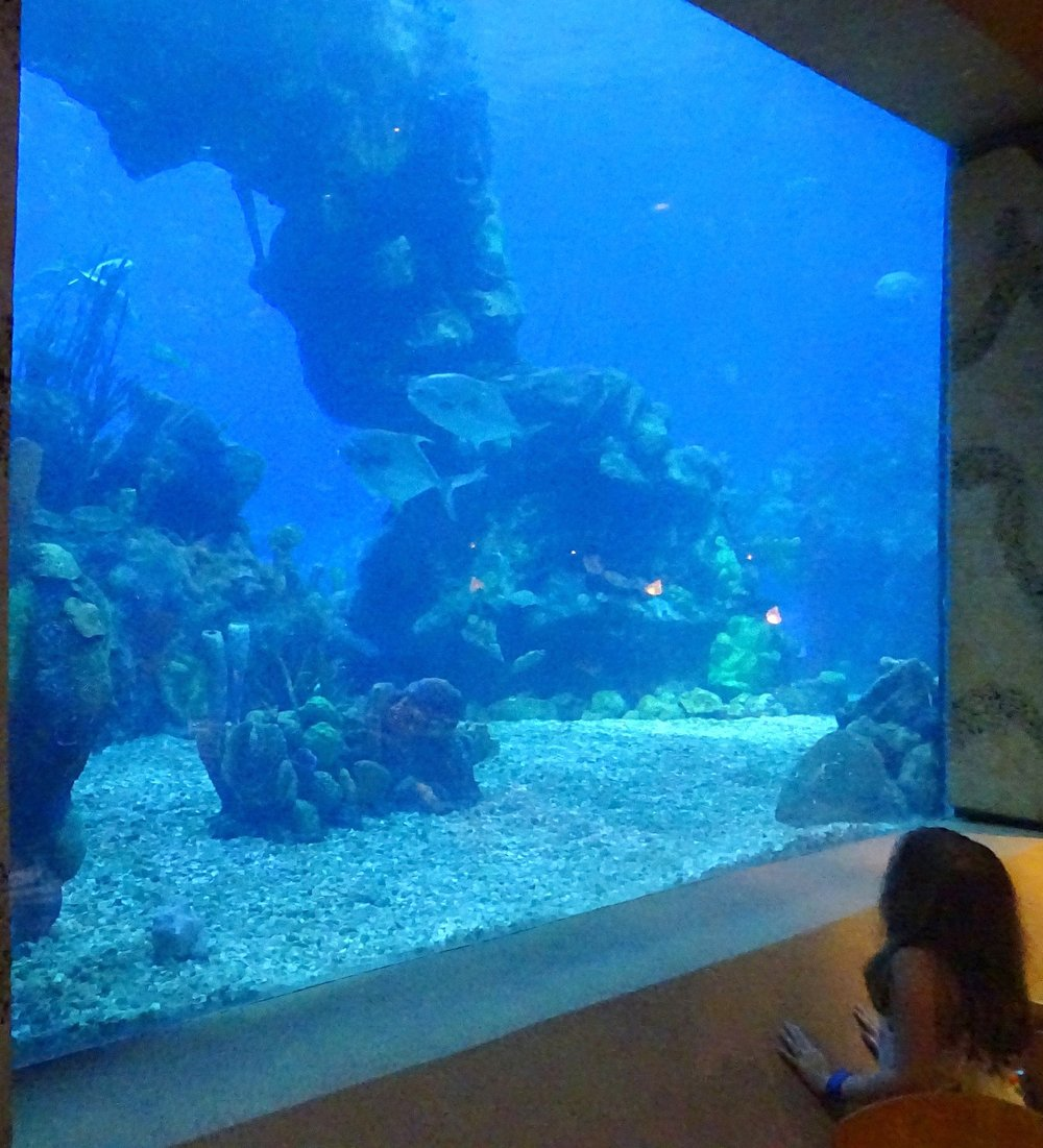 underwater restaurant disney world. DSC06040.jpg Underwater Restaurant Disney World