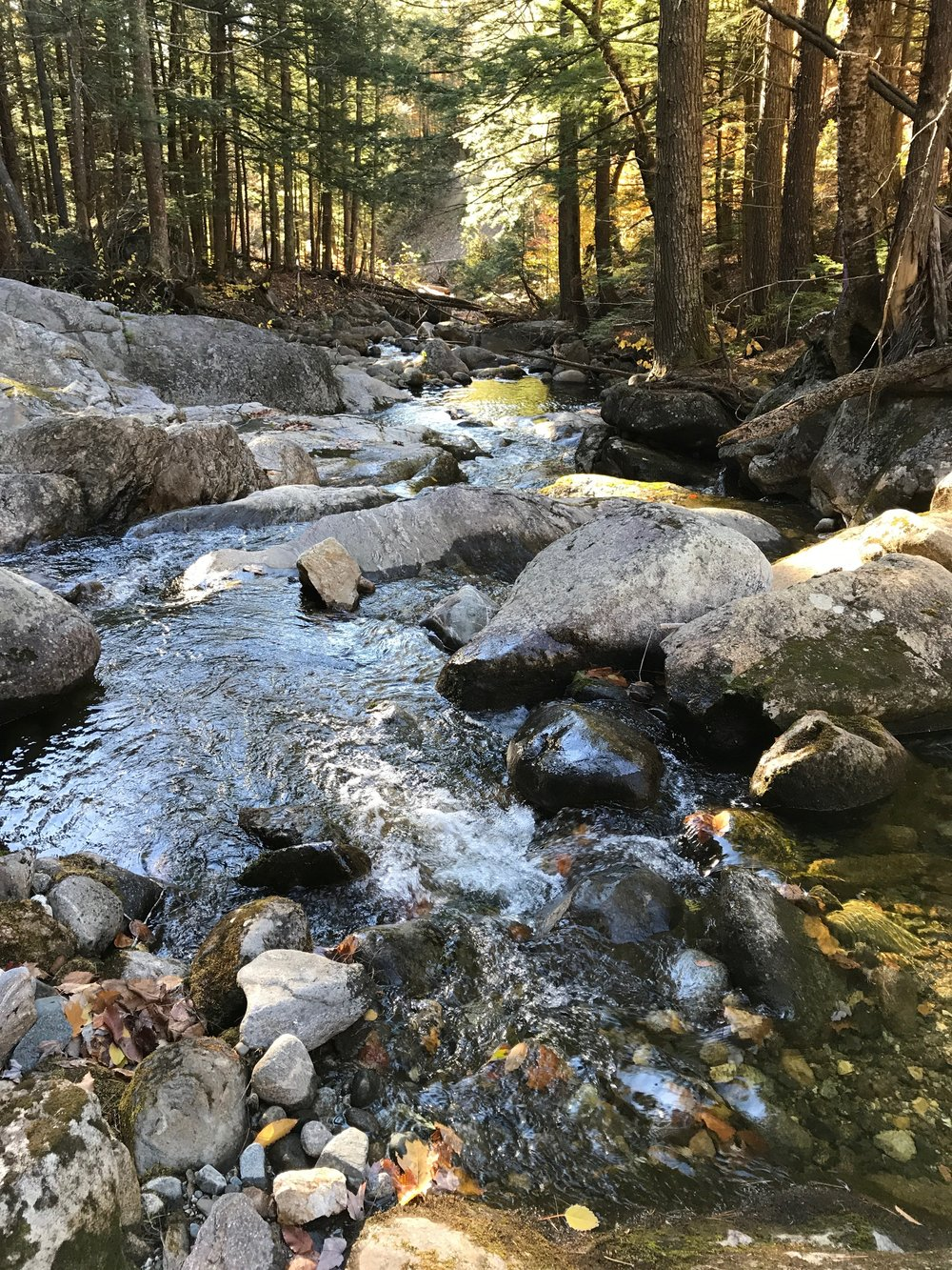 Visitors will enjoy the clear waters and cascades of four distinct branches of Chapman Brook as MLT volunteers create new trail routes.
