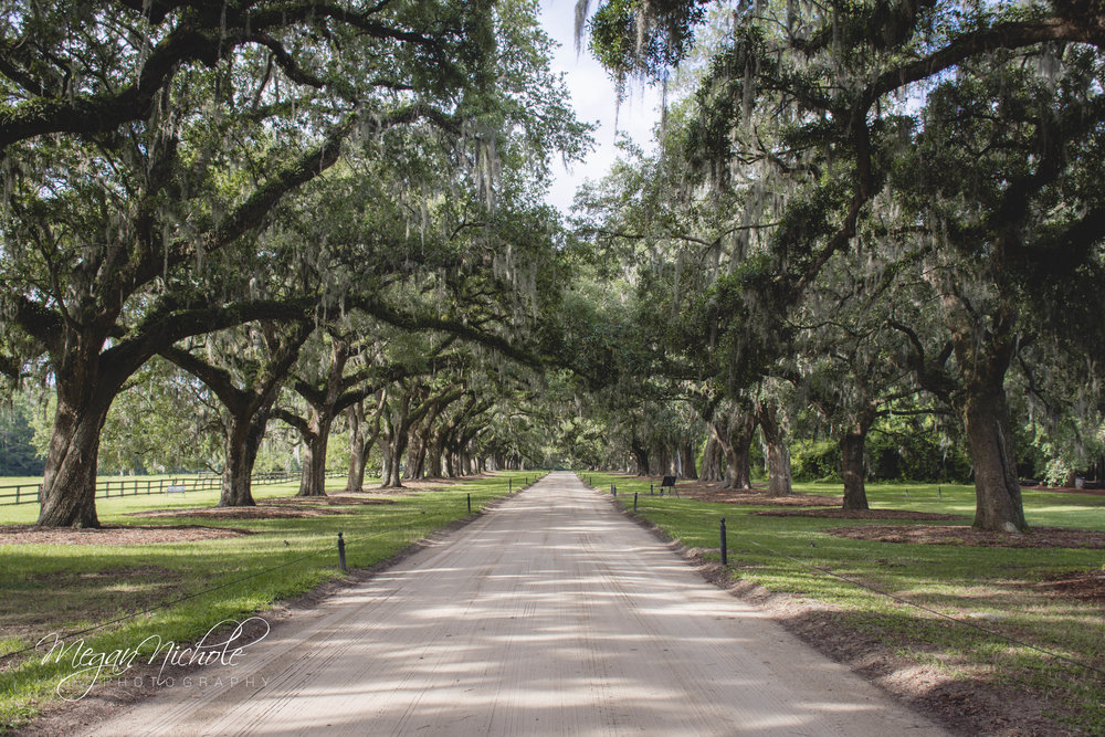 boone hall plantation trees