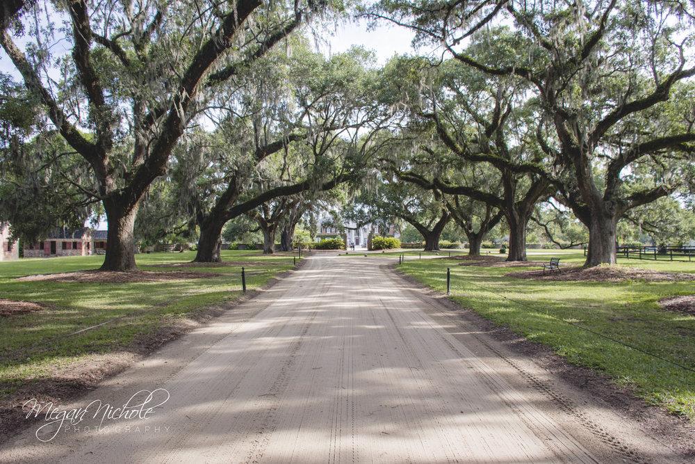 boone hall plantation oaks avenue trees