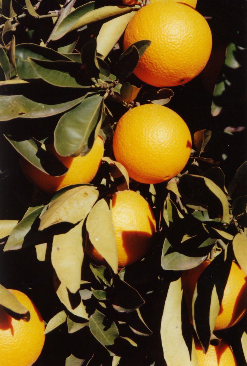 Almonds 11.jpg