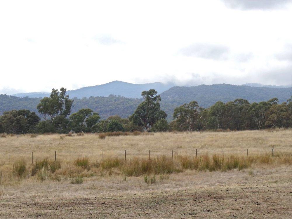 landscapefredF3.jpg