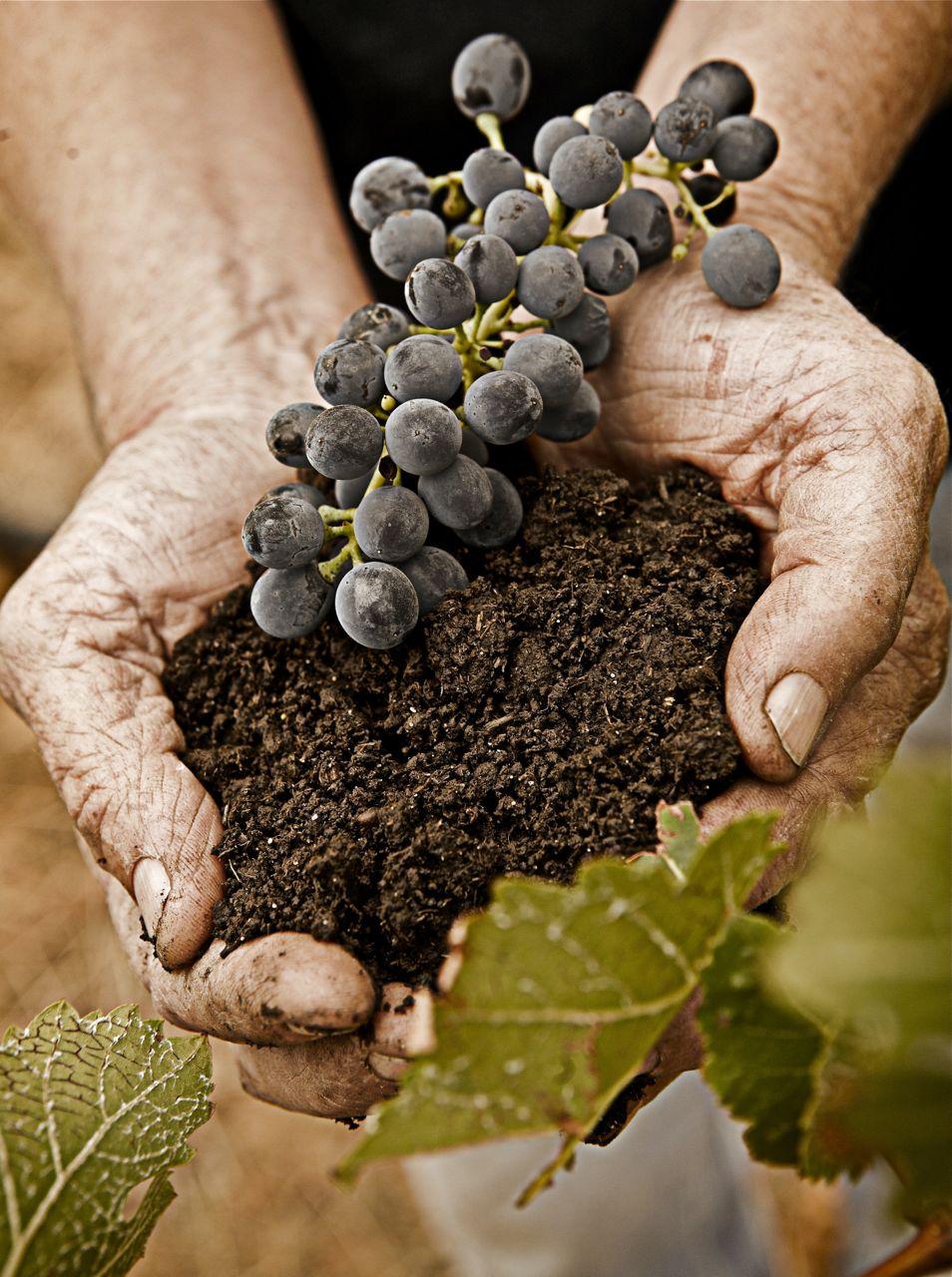 soil in grapes.jpg