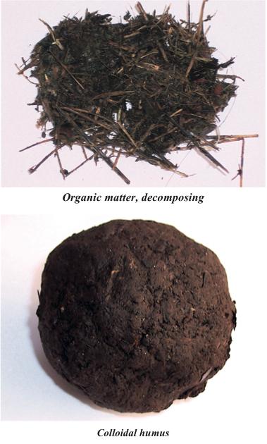 Humus_organic matter.jpg