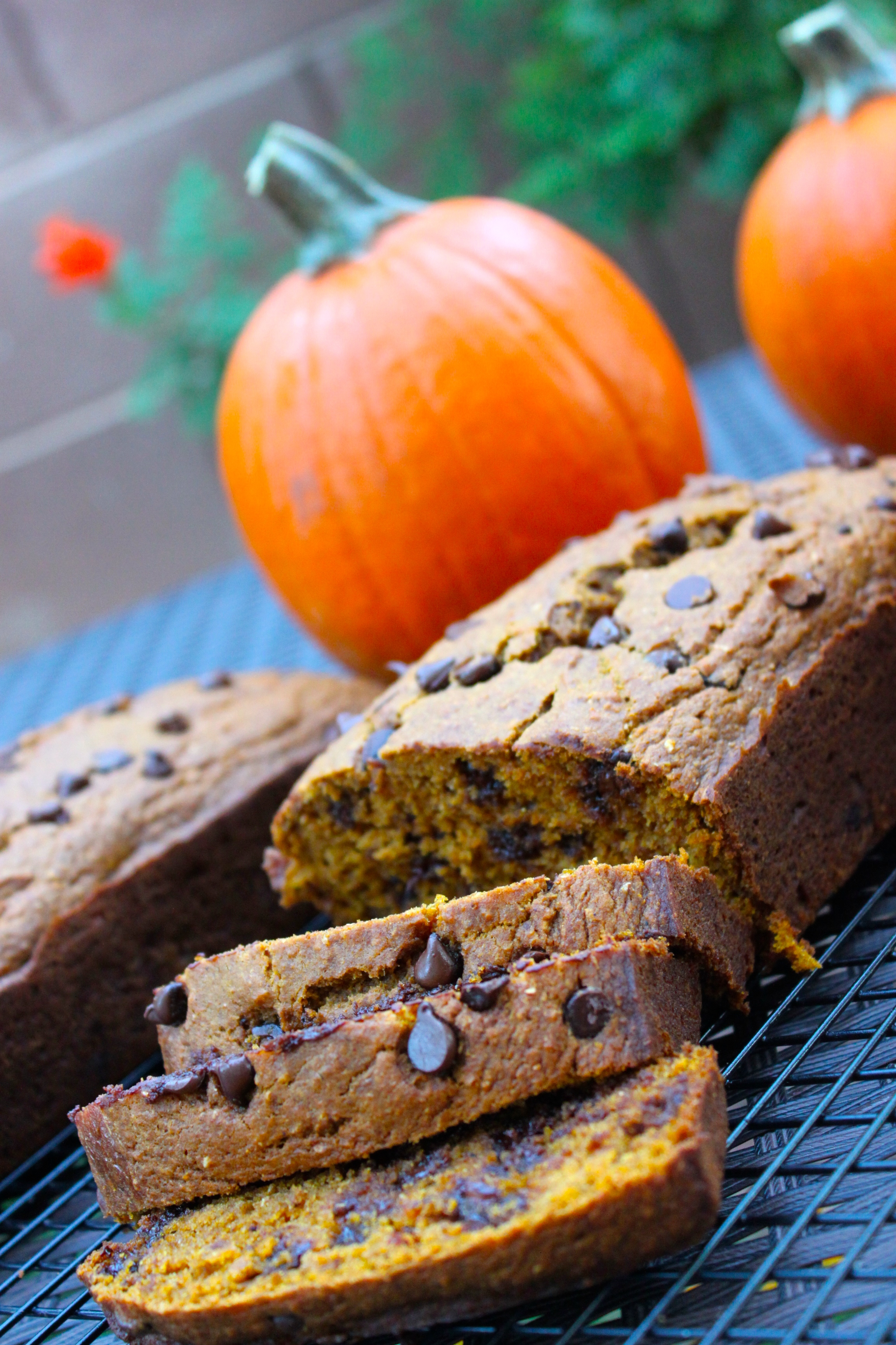 Chocolate Chip Pumpkin Bread, http://thediva-dish.com