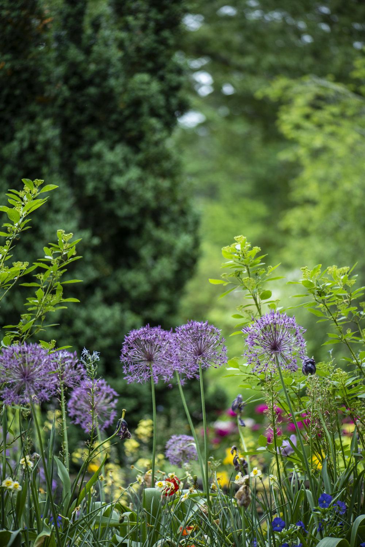 Garden photo by Unsplash